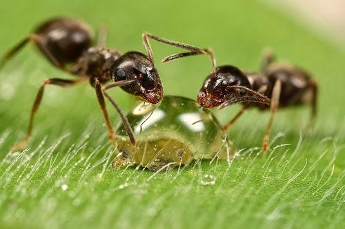 عقوبة الكذب عند (النمل) حقيقة لا خيال ؟!