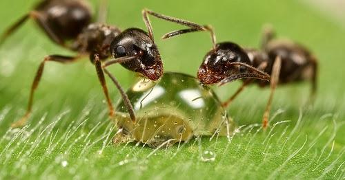 ثقافة وعلوم: عقوبة الكذب عند (النمل) حقيقة لا خيال ؟!