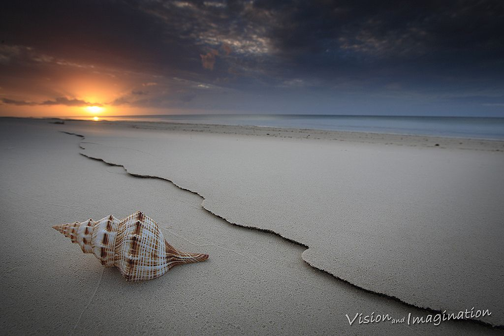 30. The Shell by Garry