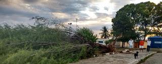 Chuva com vento derruba árvores e destelha casas em Jardim do Seridó