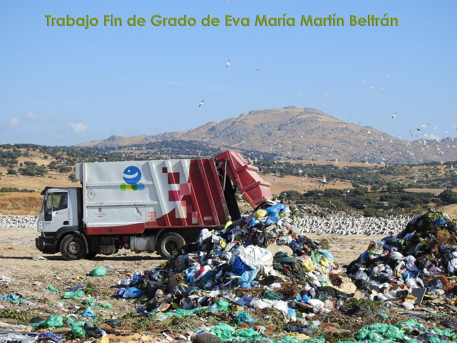 Trabajo Fin de Grado de Eva María Martín Beltrán