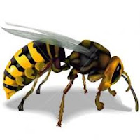 Achieving Success by Learning from Bees