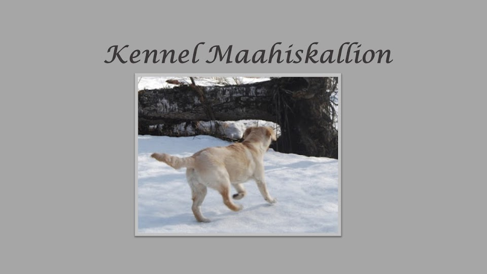 Kennel Maahiskallion