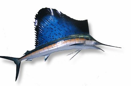 Artes de Pesca: VAMOS A PESCAR PEZ VELA