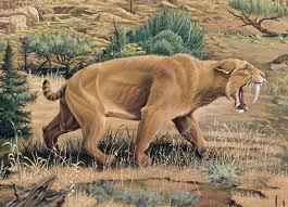 Smilodon image