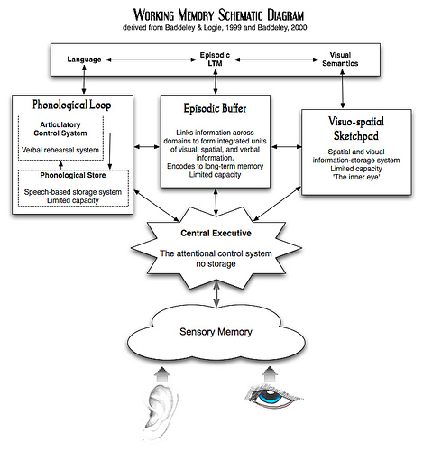 psychology essay working memory model