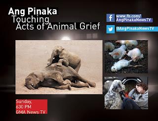 Ang Pinaka   The Most Filipino English News Variety Show
