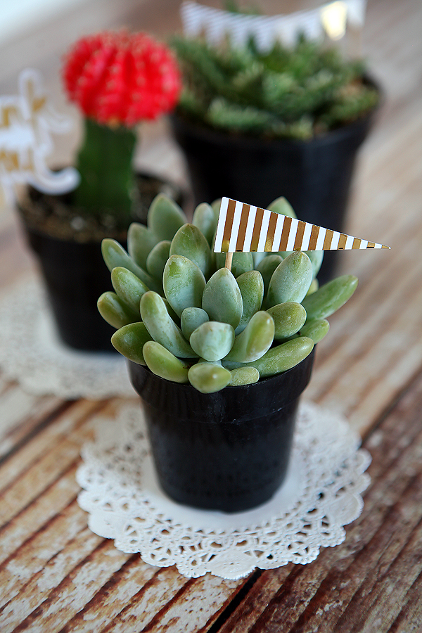 http://4.bp.blogspot.com/-Snyt-615wzI/VUF9yyTECHI/AAAAAAAAXSY/YGCoJT4bUtw/s1600/minc%2Bplant%2Bflags.jpg