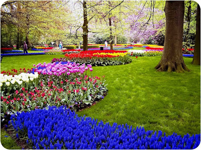 warna warni taman bunga relaks minda