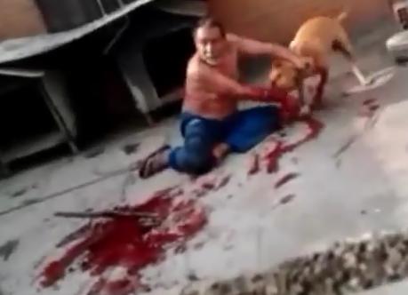 randolf blog videos de perros cojiendo con mujeres