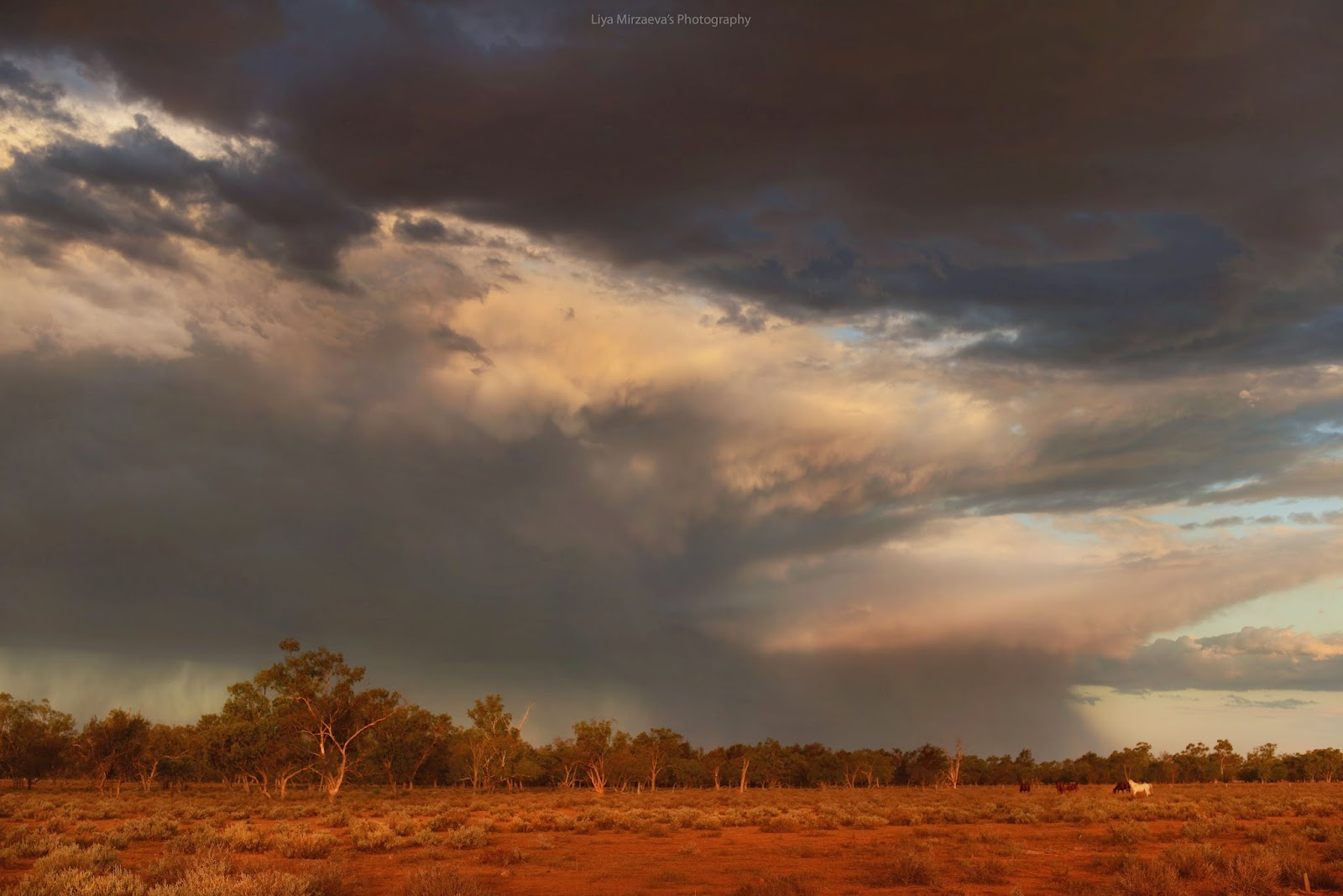 me, travel, traveler, australia, sydney, walgett, journey, amazing, wow, sun, sunset, pretty, storm, trees, nature, clouds, sun, horses, animals, farm, farmer, love