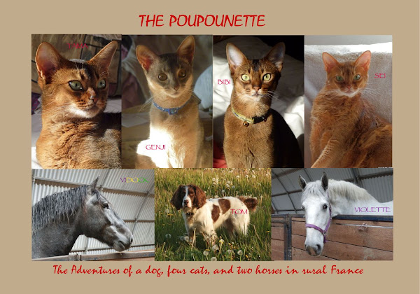 The Poupounette