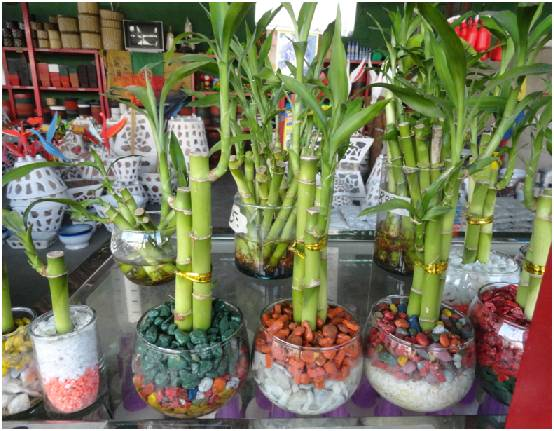 Vida a lo verde living in green consejos para cuidar sus for Como decorar plantas con piedras