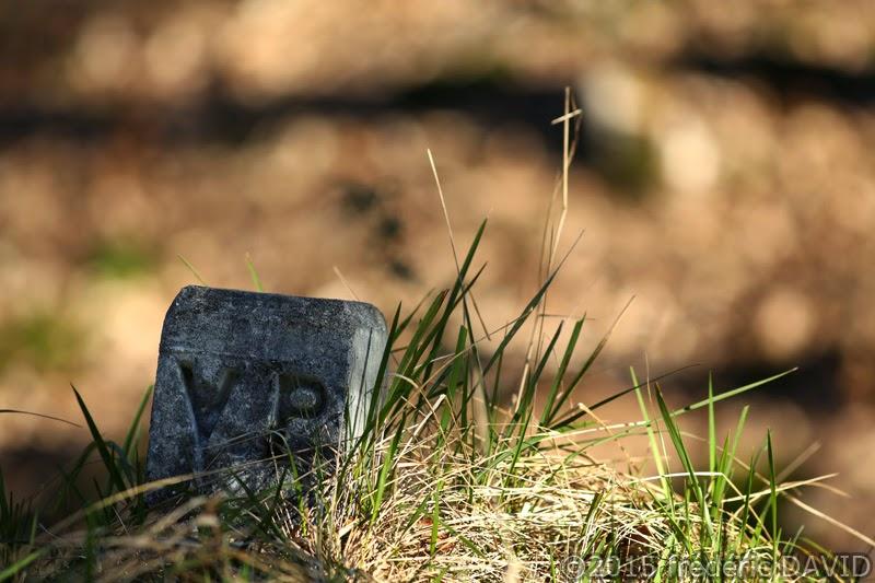 borne stèle végétation forêt Fontainebleau
