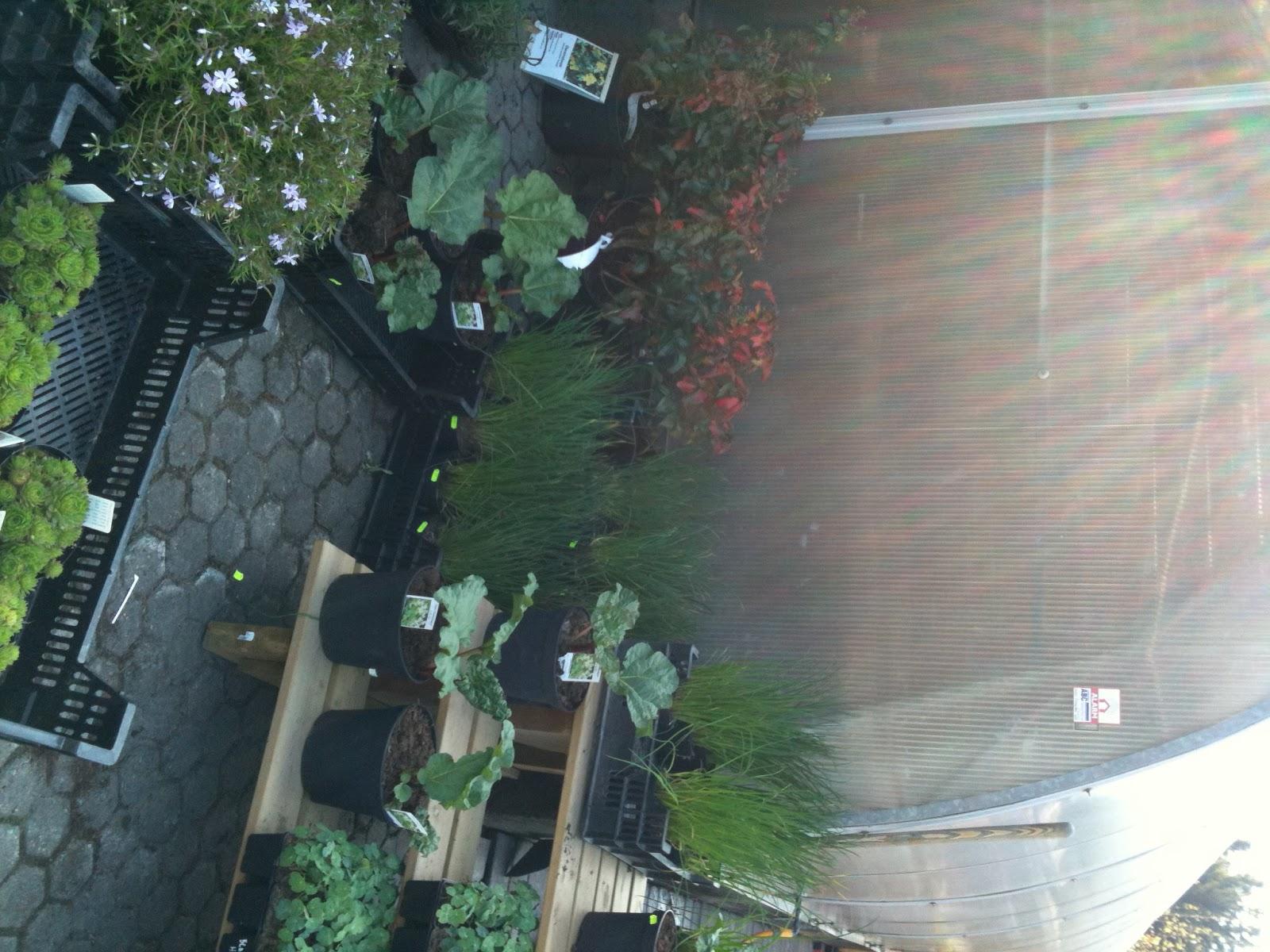 hagesenter oslo akershus