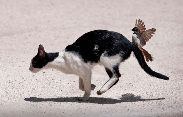 Funny animals of the week - 28 March 2014 (40 pics), bird attacks cat
