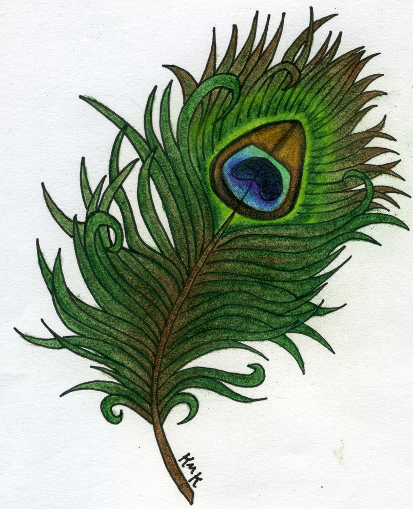 Peacock feather drawing tattoo - photo#18