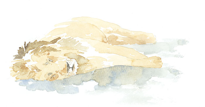 Sleeping-Lion.jpg