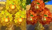 ¿Cuál es tu fruta inicial? Naranjas