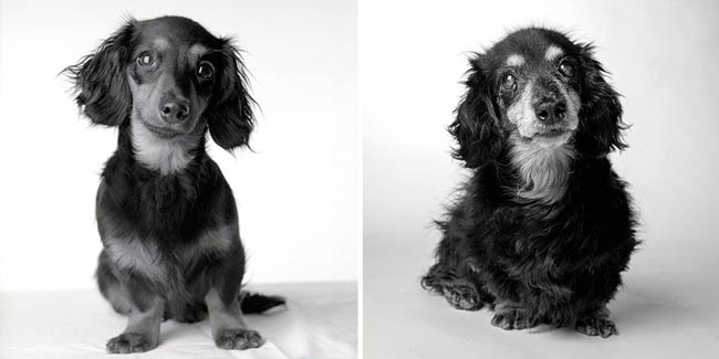 Dog Years Pictures Of Aging Dogs That Will Make Dog Lovers Cry - Lily: Eight months and 15 years.