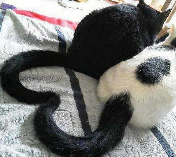 Funny cats - part 85 (40 pics + 10 gifs), cats tail make heart shape