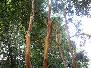 Vivero de rboles nativos array n for Viveros zona sur