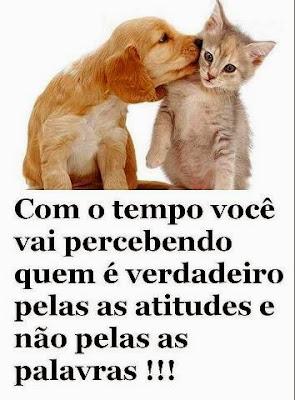 Imagens de Gatinhos para compartilhar no Facebook