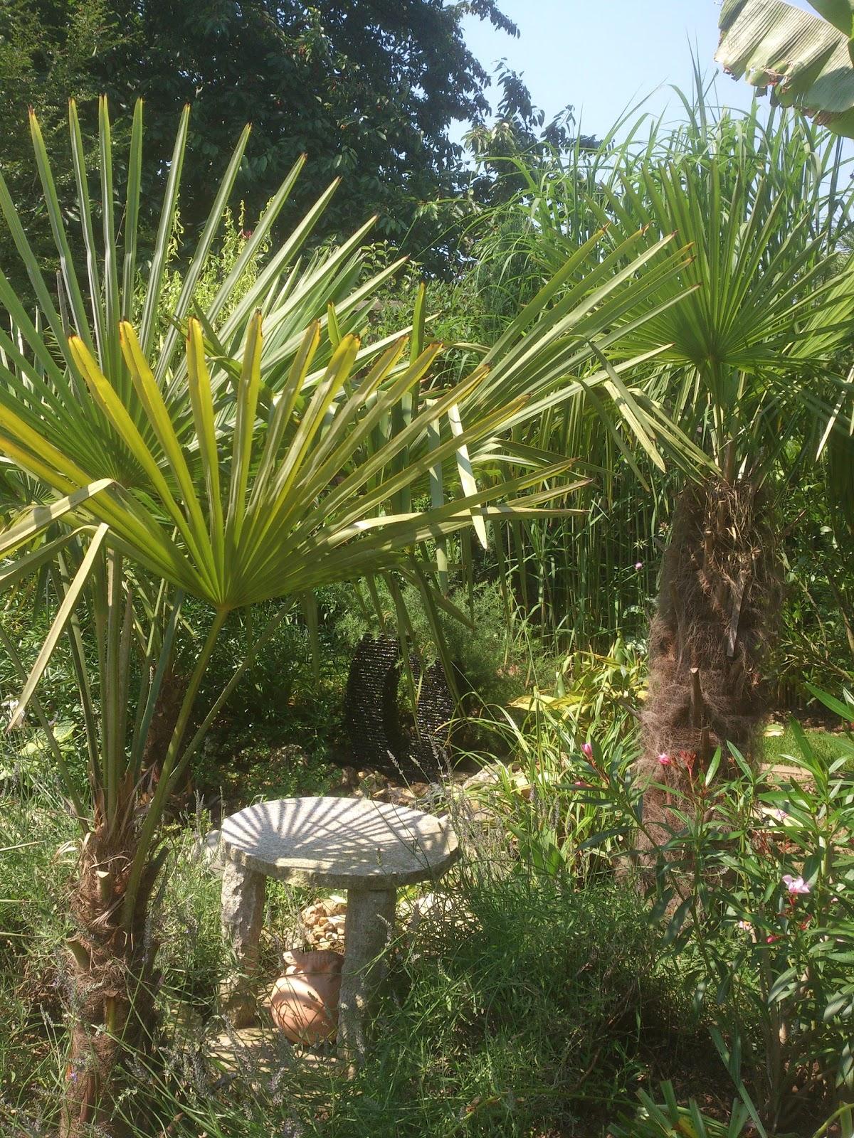 exotische pflanzen in deutschland winterhart palmen. Black Bedroom Furniture Sets. Home Design Ideas