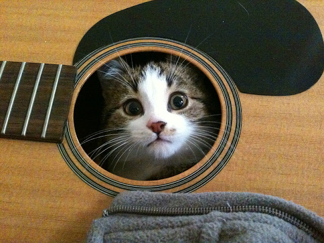 kitten inside guitar, funny cat pictures, funny cats