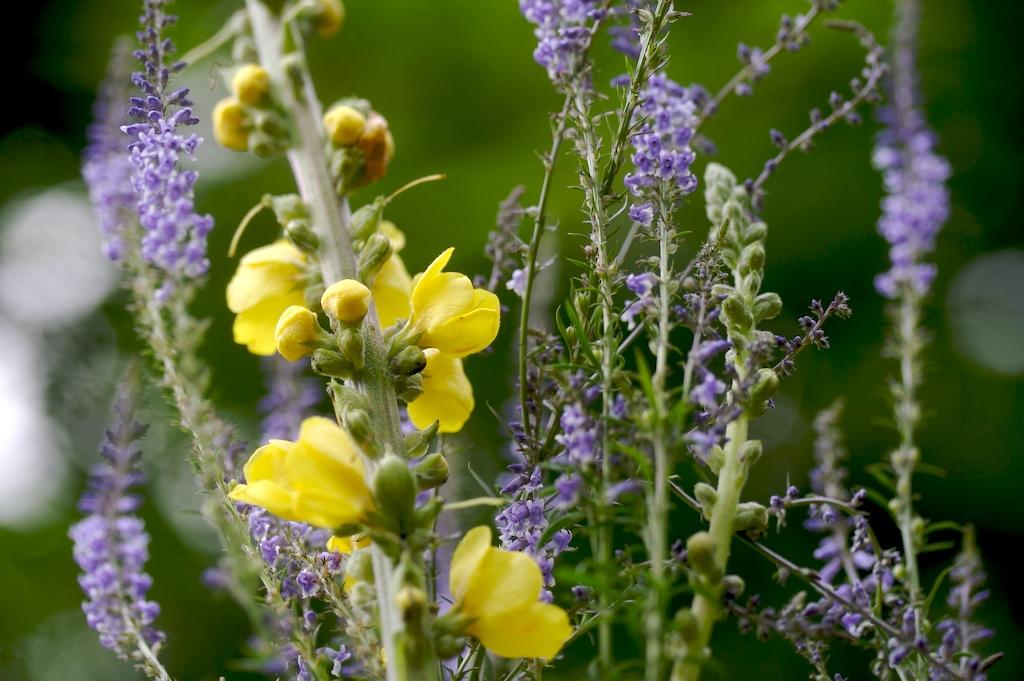 Mi herbario tipos de plantas for Tipos de hierbas medicinales