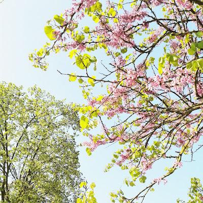 Arbres en fleurs / Paris / Photos Atelier rue verte /