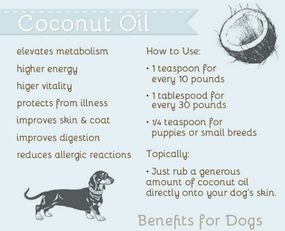 Coconut Oil Dogs - The Health Benefits Of Coconut Oil For Dogs