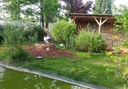 Blumengärten Hirschstetten / Störche