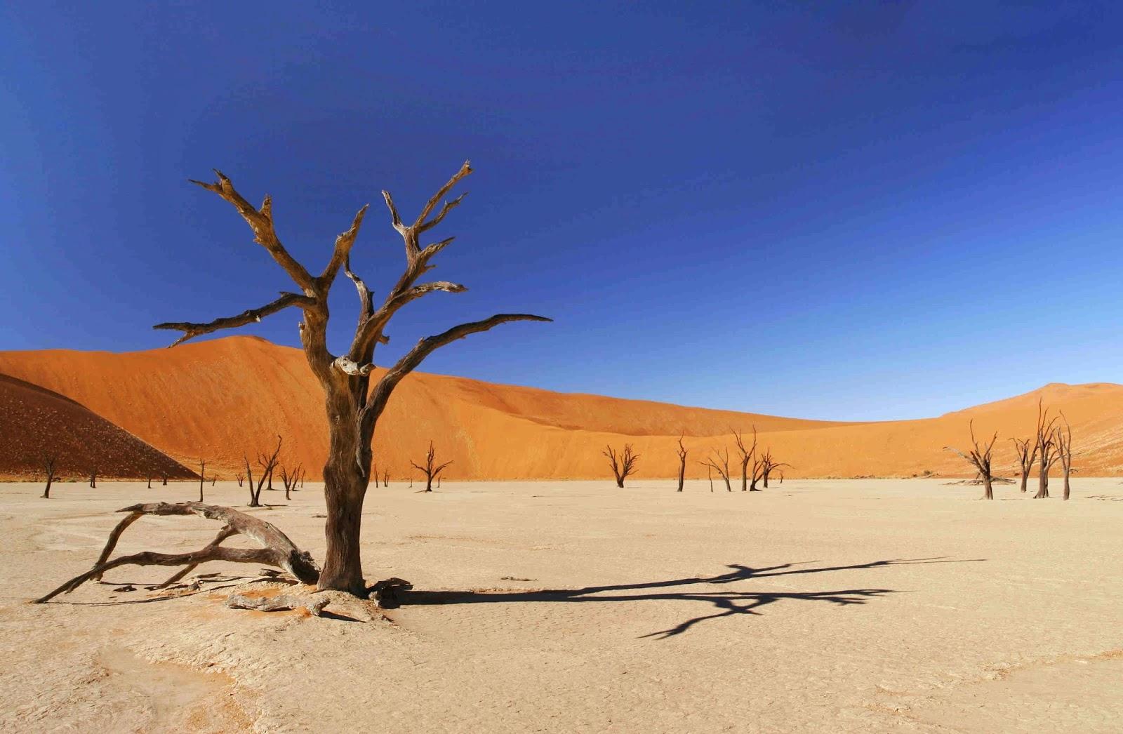 desert, America, Las Vegas, iarba, uscat, copaci, samanta, creste