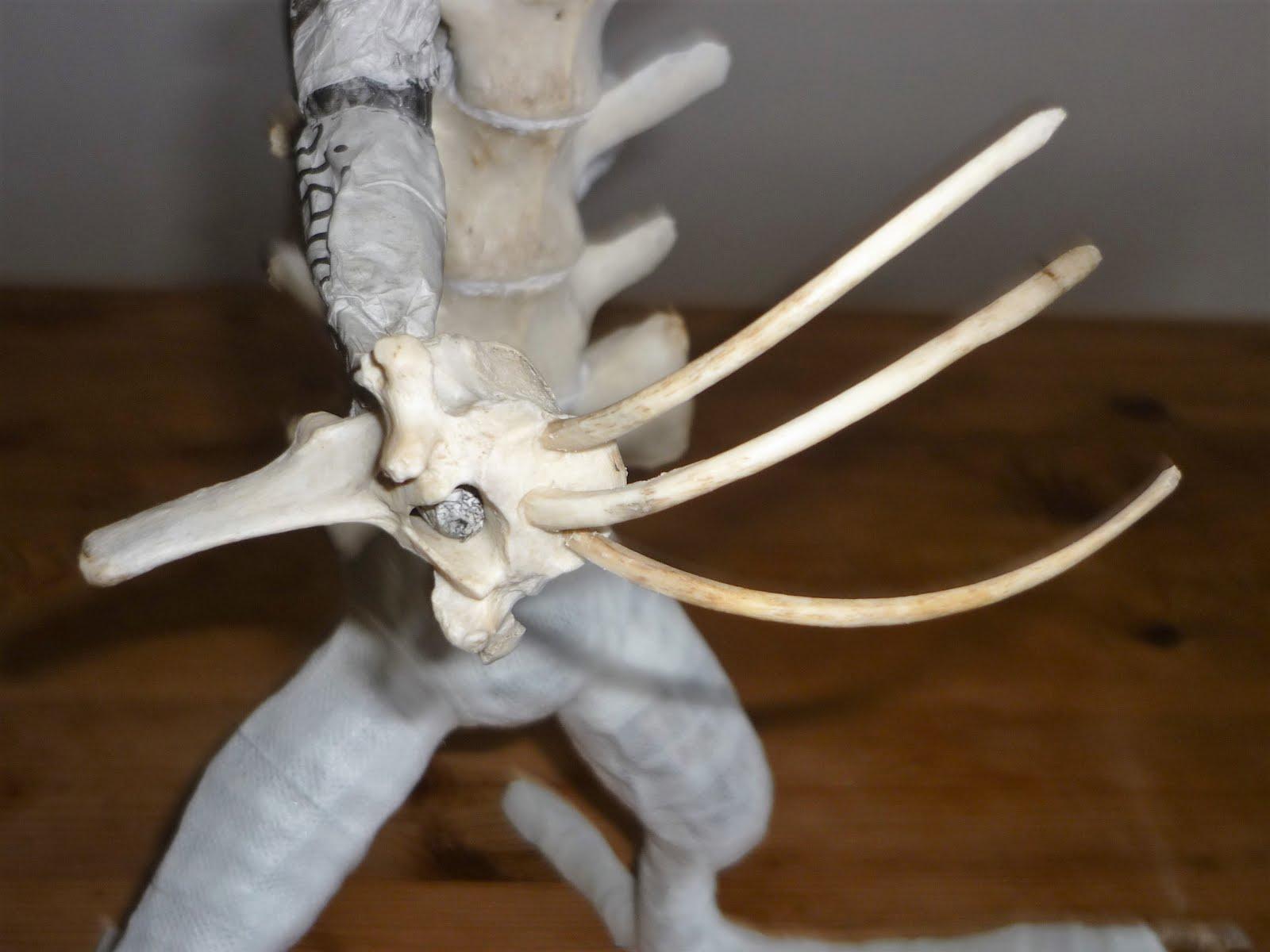 Une main griffue en os
