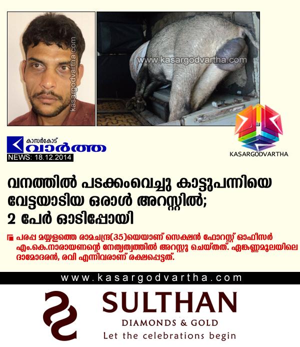 Kasaragod, Kerala, Forest, Arrest, Police, Parappa, M