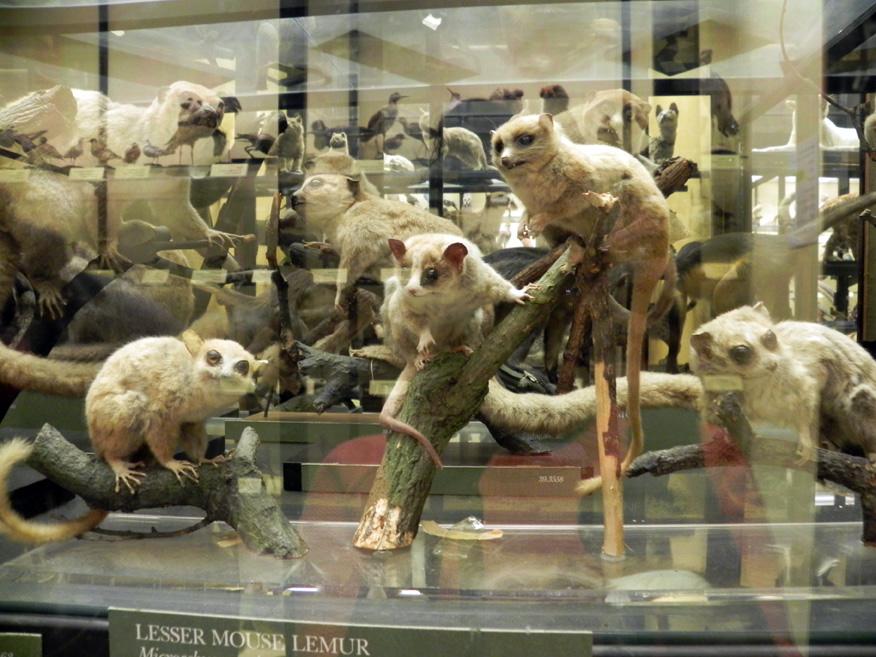 British Museum Natural History Tring