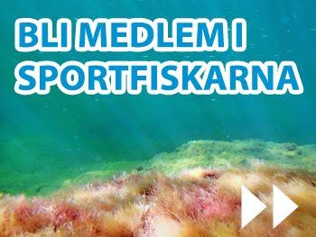 Bli medlem hos Sportfiskarna