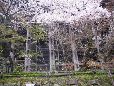 京都市・音羽山 清水寺のさくら