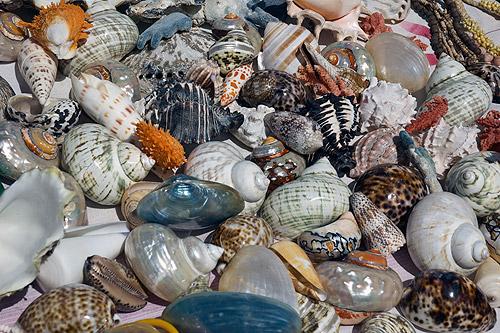 Black Sea Shells on Sunset Car Photography