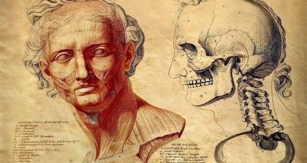 Científicos Descubren Nueva parte del Cuerpo Humano