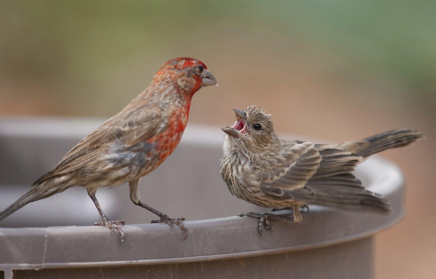 Bird Songs and Calls - all-birds.com