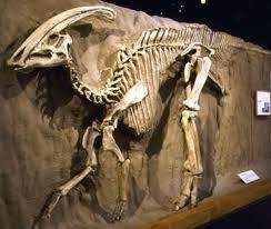 Fósil de dinosario