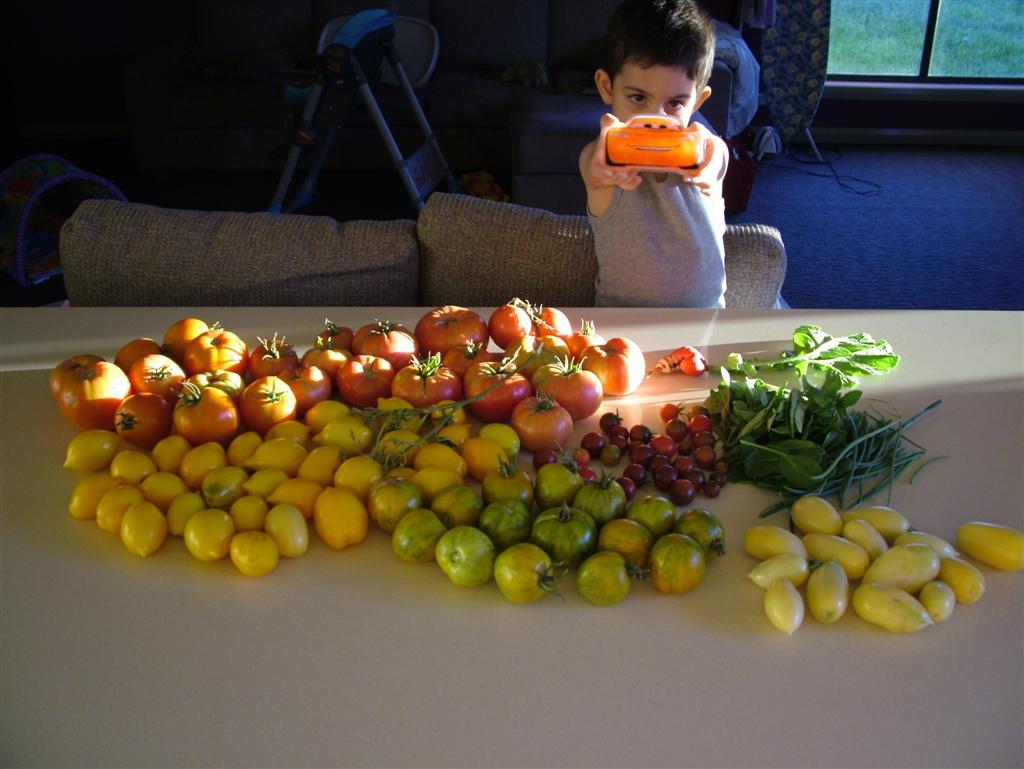 Kabak. Yetiştirme ve bakım - sebze yetiştiricisini bilmeniz gereken her şey