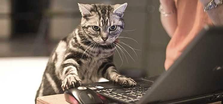 Kucing di hadapan komputer