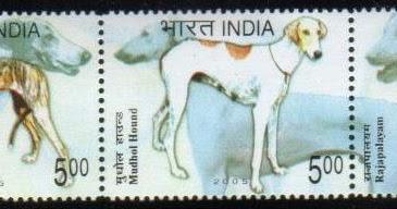 2005年インド ヒマラヤン・シー...
