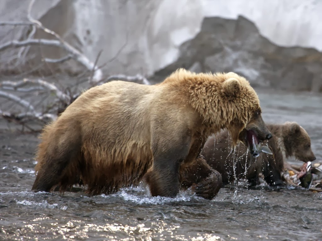 "<img src=""http://4.bp.blogspot.com/-SsNUuTIPllA/UtuqL1CUl_I/AAAAAAAAI_U/vXDV1EtM-f0/s1600/grizzly-mother.jpeg"" alt=""grizzly mother"" />"
