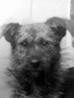 Mondrian's dog Beppie
