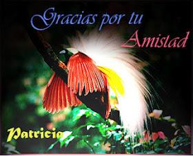 Pájaro del paraíso (regalo de patricia)