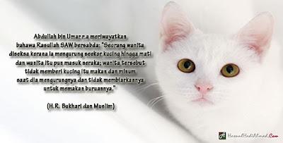 kucing, tentang, gambar, fakta, hadith, rasulullah, nabi, kajian, saintis, ujikaji, hasil, mengenai, wudhuk, air, solat, najis, kotor, soheh, riwayat